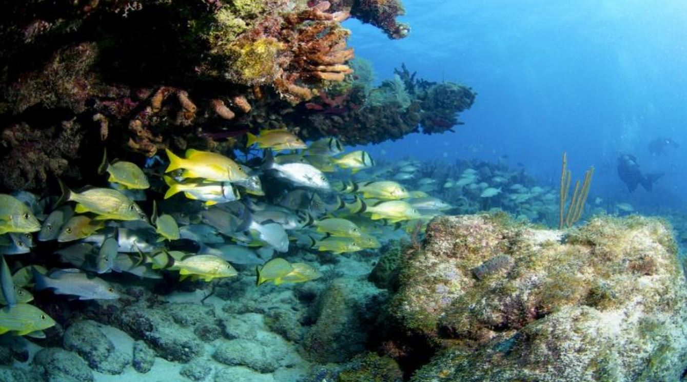 floridakeys-tropical-fish
